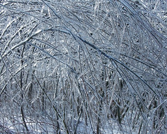 Ice Trees (Barta IV) Tags: trees winter cold ice frozen sticks bend freeze bent brnaches