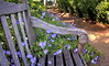 Overgrown… (Wes Iversen) Tags: flowers blossoms blooms benches chicagobotanicgarden hcs nikkor18300mm clichésaturday