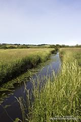 Wetlands (DMeadows) Tags: summer water rural reflections river reeds scotland countryside country reserve wetlands grasses marsh loch lilypad marshland wetland rspb lochwinnoch davidmeadows giveusyourbestshot dmeadows davidameadows dameadows 522013week28