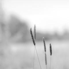 Summer Strands (S-P-Photography) Tags: summer blackandwhite bw art monochrome 35mm square mono nikon kodak f14 dream sigma dxo impression 500x500 filmpack squarephotography d7000