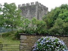 Torre del Castillo de Moeche. (lumog37) Tags: castles architecture arquitectura towers hydrangeas castillos torres hortensias