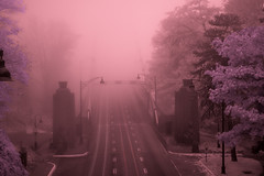lions gate in fog (Juan Rostworowski) Tags: city longexposure bridge pink trees light colour fog vancouver photoshop ir movement nikon purple bridges filter infrared stanleypark lionsgatebridge nikkor hoya r72 hoyar72 vancouverobserver