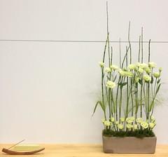 "ikebana nantes nov 2013 - Béné Fleury • <a style=""font-size:0.8em;"" href=""https://www.flickr.com/photos/109104648@N03/10933640794/"" target=""_blank"">View on Flickr</a>"