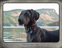 "FINAL Blue Weim 2014 calendar_Page_06 • <a style=""font-size:0.8em;"" href=""http://www.flickr.com/photos/109220014@N05/10955725806/"" target=""_blank"">View on Flickr</a>"