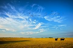 Late Autumn in Kansas (JimBoots) Tags: