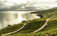 lavaux sur la colline (mamuangsuk) Tags: automne vineyard cloudy unesco paysage vignoble lakegeneva lacleman lavaux vinblanc chasselas stsaphorin epesses dezaley calamin mamuangsuk