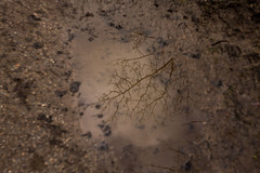 mudd mirror (beta karel) Tags: light brown water pool reflections sand woods branch shadows trail refelction mudd 2014 muddpool ©betakarel