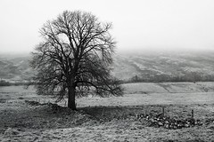 Dalnacardoch (Leirinmore) Tags: trees winter bw cloud white mist black mountains tree scotland highlands sony photographing nex