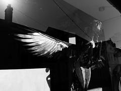 pegasus (watcher330) Tags: wingedhorse newcastleemlyn