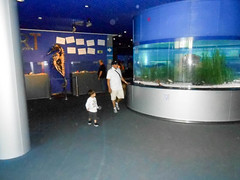 Aquarium (Going to the Zoo with Trebaruna) Tags: valencia zoo aquarium spain oceanografic loceanografic loceanograficvalencia aquariumvalencia