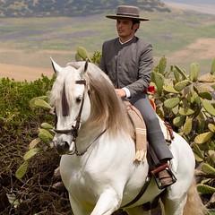 Yeguada Algaida . El placer de montar un buen caballo . (yeguadaalgaida) Tags: horses square caballos squareformat mga pferde cavalli pura cavalo kuda hevoset hester chevaux paarden  andaluz kone raza espaola perde nees  hstar kon hestar heste kabayo    konji atlar lovak  hobused chwal cartujano    kuajt  iphoneography  pfede instagramapp uploaded:by=instagram      nynya    dawakai