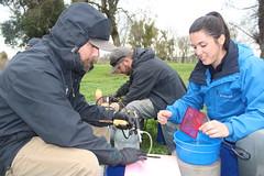 Marking Hatchery Salmon