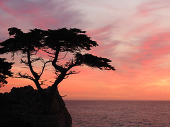 Lone Cypress Sunset (PhotosByMichel) Tags: olympus 1240mm f28 17miledrive california pacificgrove sunset tree sky ocean prominent