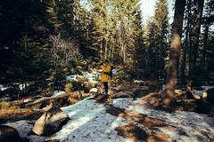 Traveler (Philipp Sarmiento) Tags: travel philipp sarmiento photographer explorer canon 5d mark3 dji phantom 3 landscape drohne forest arbersee bavaria regensburg