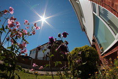 The Sun Is Our Star (8mm & Other Stuff) Tags: morning flowers houses sky urban sun house wales canon out photography one for this is village shots many wideangle an trying fisheye few lensflare f22 setting 8mm today took opportunities northwales samyang i not ourstar