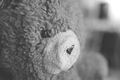 A blast from the past (sacrofanite) Tags: bear animal toy stuffed teddy
