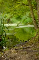 (DigitalCanvas72) Tags: trees nature rain clouds landscape moss woods dof natural dirt dew groundlevel forset 50mmlens nikond7000 presurve nikon50mm18g nikonmbd11