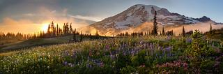 Rainier Sunset Meadows Pano