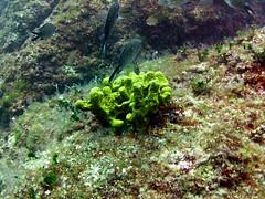 Plic Tenki, Vrbnik, Croatia (yayapapaya77) Tags: fish rock underwater croatia diving fisch fels mediterraneansea adria krk tauchen unterwasser mittelmeer vrbnik tauchplatz sealifemini plictenki