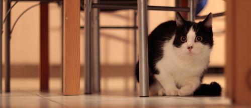 Katze unterm Tisch