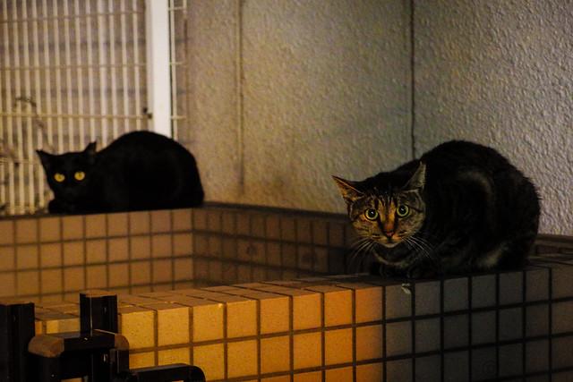 Today's Cat@2013-09-30