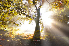 Urkiola (Jabi Artaraz) Tags: light luz contraluz sony zb bizkaia euskalherria basquecountry rayos paysbasque rayosdeluz argia urkiola euskoflickr superaplus aplusphoto jartaraz alfa350 jesuscmsfavoritesgallery