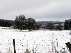 DSC_7566 (Roelofs fotografie) Tags: autumn winter sky white snow nature landscape geotagged woods nikon belgium belgie sneeuw ardennen ardennes herfst natuur wolken lucht bos wit wilfred landschap laroche d3200 roelofs samree
