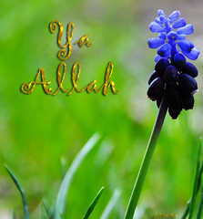 Ya Allah (gLySuNfLoWeR) Tags: blue flower muslim islam allah