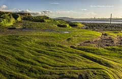 The Slippery Stuff (Glyn Owen Photography & Image-Art) Tags: lighthouse seascape seaweed green liverpool landscape moss sandstone rocks seashore tidal hale merseyside