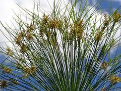 Gras (Christine Amherd) Tags: creativity australia victoria vic australien ine passionate mypassion werribeepark christinescreativityphotography christinesphotography