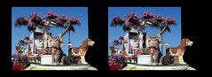 3D Pet Care Float (rgb48) Tags: california flowers cats dogs 3d stereo beverlyhills pasadena roseparade float crosseyedstereo stereographics 2014tournamentofroses petcarefoundations