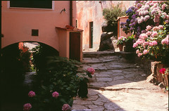Isola d´Elba (10) (cs beautiful world) Tags: italy film analog 35mm europe italia olympus tuscany olympusom2 om2 toskana fujivelvia