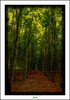 FORÊT DE DESVRES (3) (régisa) Tags: tree forest arbol arbre forêt desvres mygearandme flickrstruereflection1 flickrstruereflection2