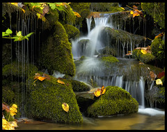 Untitled (Sapna Reddy Photography) Tags: autumn fall nature water colors leaves flow waterfall moss stream foliage