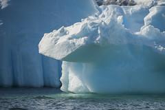 Antarctica 108 (Morten Skovgaard) Tags: travel snow cold ice expedition nature animals penguin penguins wildlife antarctica adventure seal seals iceberg zodiac polar rare plancius southpole antarktis sydpolen mortenskovgaard oceanwideexpeditions godknd