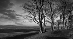 Chanctonbury Ring in West Sussex on the South Downs Way (Explored) (Simon Verrall) Tags: uk sky blackandwhite tree monochrome landscape photo westsussex outdoor serene february 2014 ironagefort chanctonbury thesouthdowns thesouthdownsway