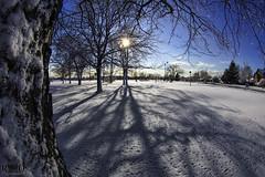 Mid March Snowfall - Oak Lawn, IL (Rick Drew - 19 million views!) Tags: park blue trees sky sun snow tree field canon march centennial long baseball grove ground fresh bark 2014 shadoes 815mm