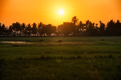 Sunrise, Alleppey, Kerala, India (CamelKW) Tags: india sunrise kerala backwater alleppey 2014