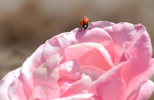 Bichejo y flor
