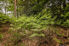 The Fight For Light (Glyn Owen Photography & Image-Art) Tags: uk trees england fern forest leaf sticks floor britain litter foliage twigs undergrowth