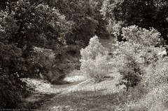 A Small Creek (RRP Photography) Tags: borderfx