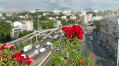 Nature in town (freddylyon69) Tags: flowers red summer france motorway lyon pointofview trainstation perrache fourvière