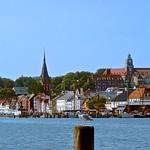 Der Flensburger Hafen mit Seemöwe auf einen Holz Poller und Blick auf das Westufer thumbnail