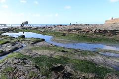 MRP_7355 (preedyphotos) Tags: cornwall kernow portreath beach coast northcornihcoast rocks tidesout walkingonbthebeach beachwalking outdoors exercise sand martinpreedy canon eos1dx
