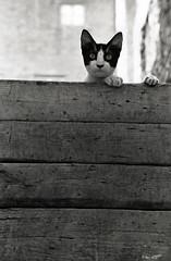 walter_rothwell_photography_593 (walter_rothwell) Tags: walter rothwell photography cairo cats egypt blackandwhite fuji neopan400 35mm film nikonf6 analog monochrome