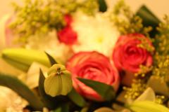 Saturday roses (Nourah.A.Edhbayah (Super Flower♥إظبيه)) Tags: الكويت اظبيه عبدالله نوره edhbayah abdullah q8 kuwait nourah rose roses saturday