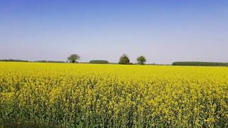 Ma quanto giallo 💛🌾 #villastellone #giallo #campo #estate #24gradi☀���