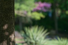 By the Tree (brev99) Tags: plants blur tree green maple bokeh tamron70300vc