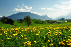 I am in love with this world... (ceca67) Tags: flowers nature landscape photography schweiz switzerland photo spring nikon flickr dandelion d90 ceca 2013 coth5 fleursetpaysages