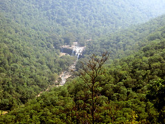 Munnar (Ben Everitt) Tags: trees india vegetables fruit tea top hill trains kerala lorry waterfalls barber shops monkeys bushes munnar sugarcane gandi plantations sugracane